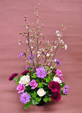 Flowers Photo Album 季節の花